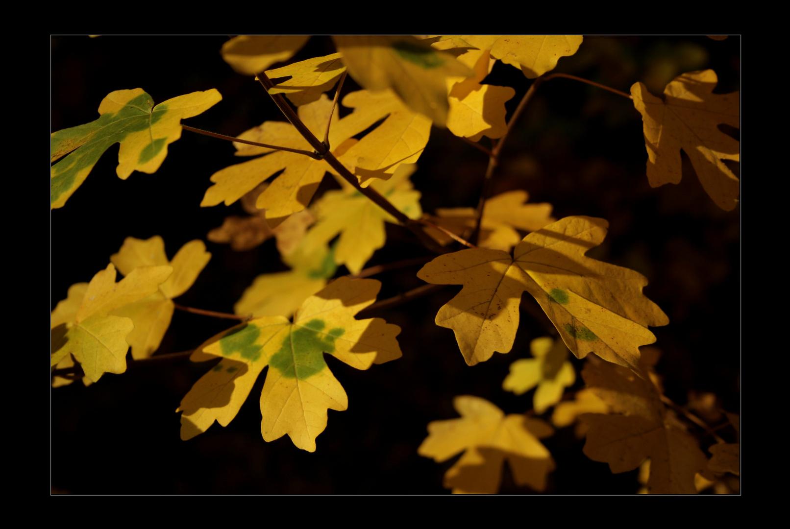 Blätter im Wind