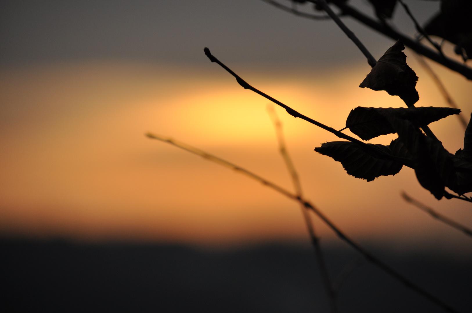 Blätter in Abendstimmung 1