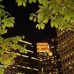 Blätter in der Stadt