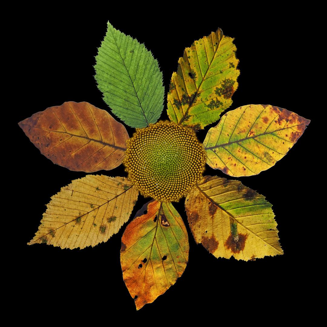 Blätter-Lebenszyklus
