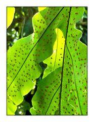 Blätter-Licht