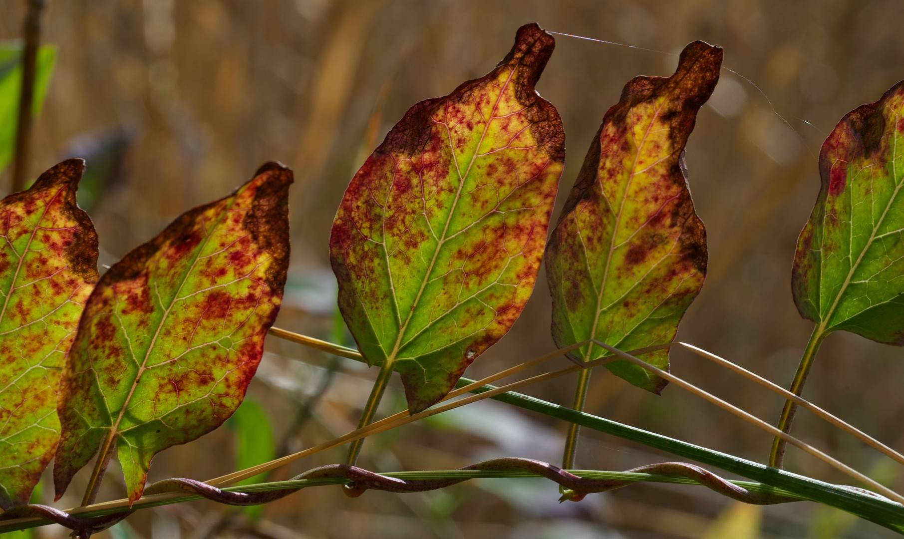 Blätter Makro