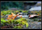 - Blätter & Moos -