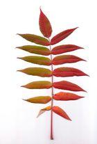 Blätter Nr. 2