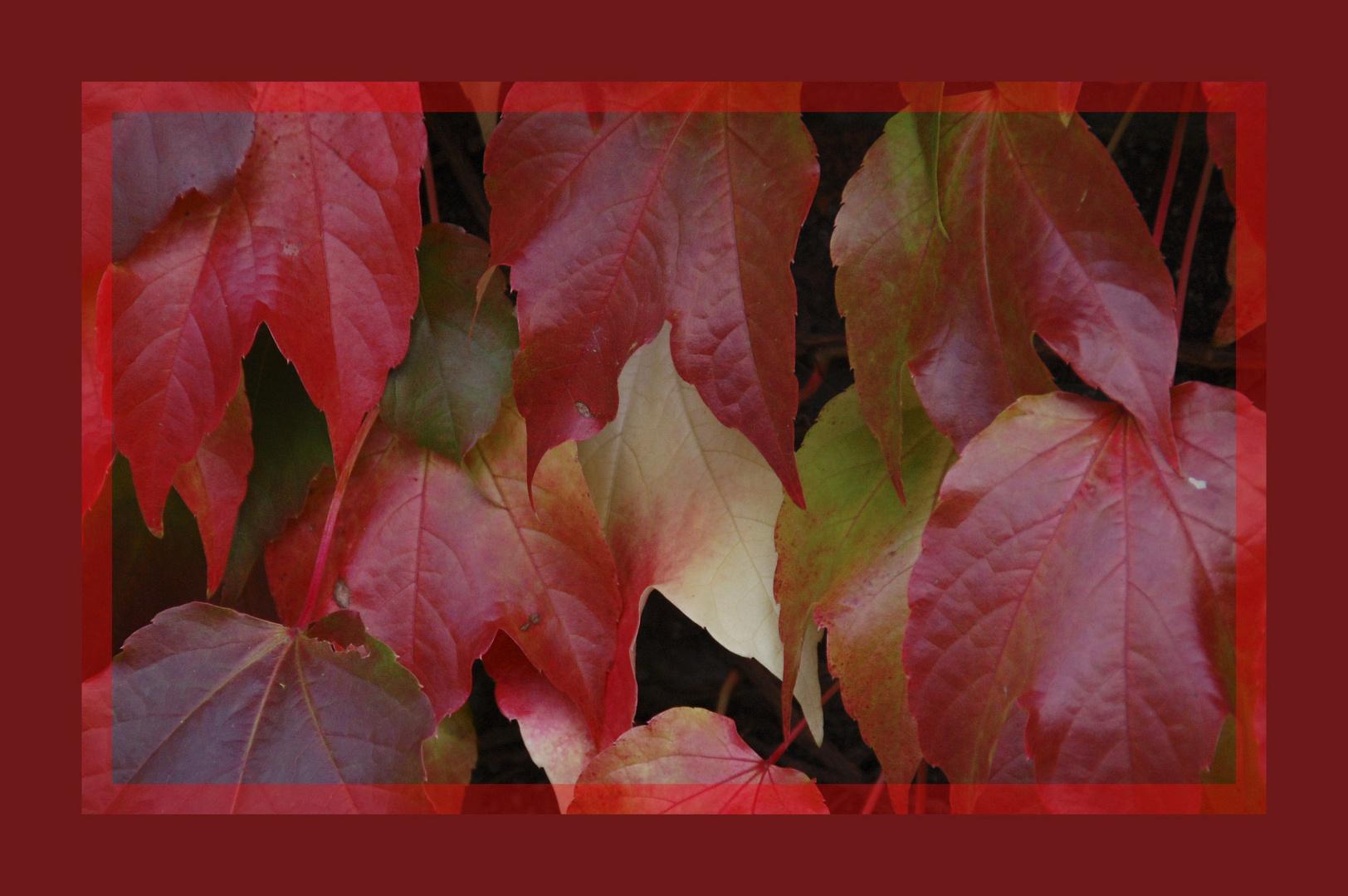 Blätter-Rahmen