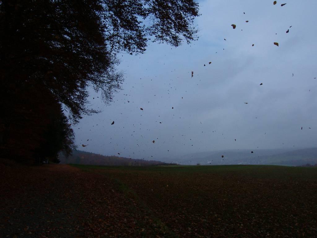 Blätter regen