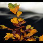 Blätter über der Thaya
