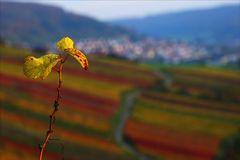 Blätter überm Weinberg
