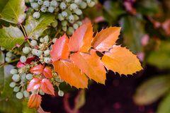 Blätter und Beerenim Herbst