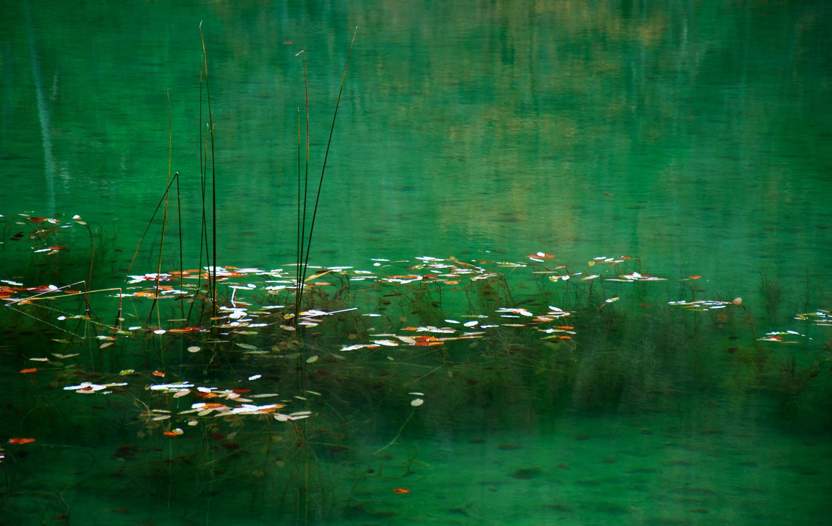 Blätter und Pflanzen im See