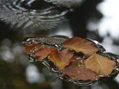 Blätter und Wasserwellen