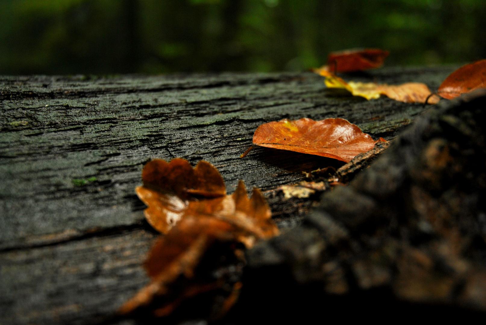 Blätter #vd