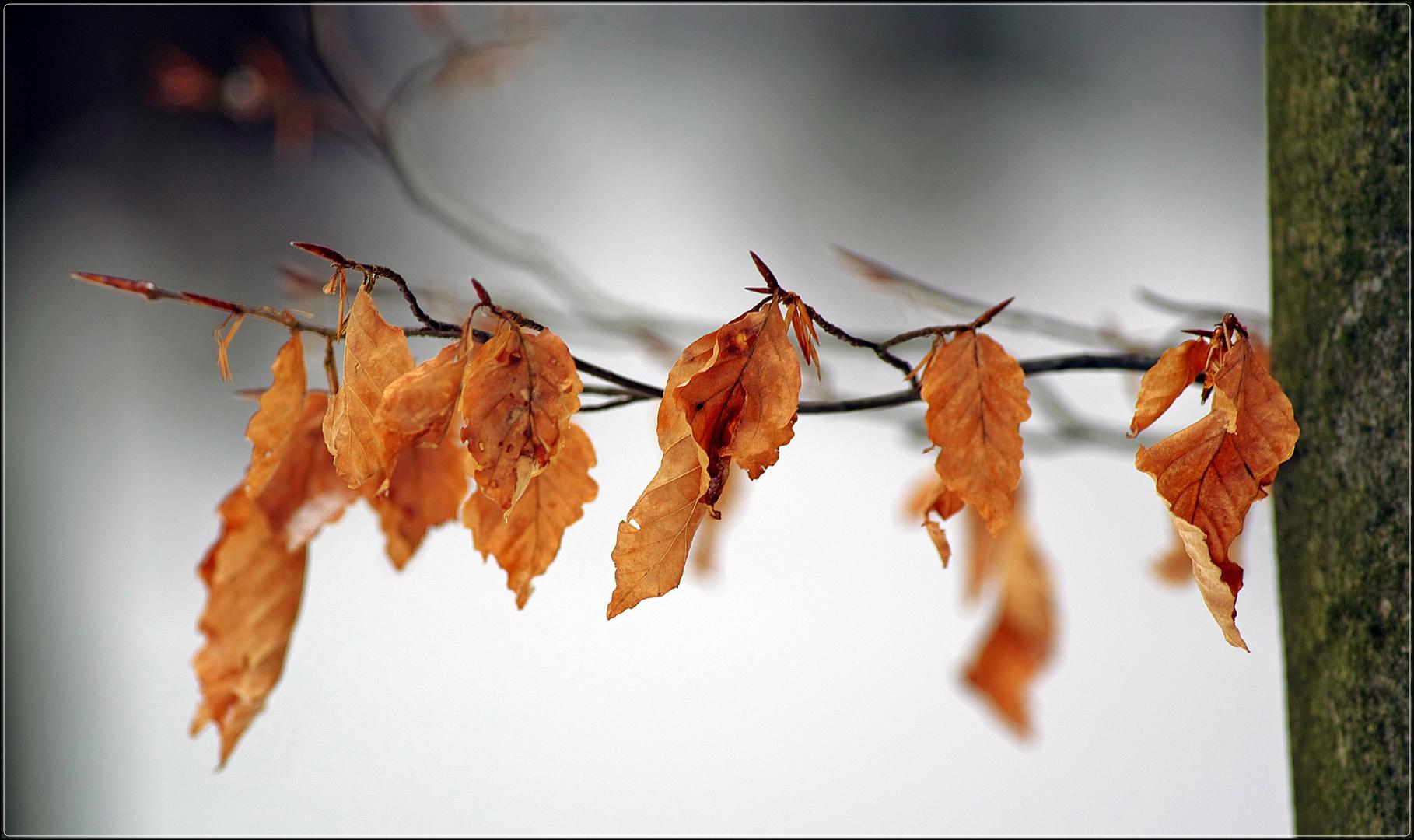Blätter vom letzten Jahr