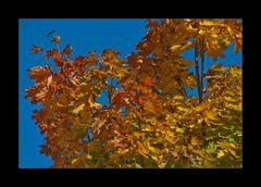 Blätter Zauber