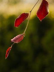 Blätter_165