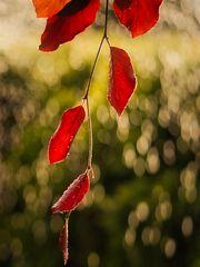 Blätter_166