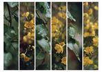 Blätter&Blüten