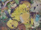 Blätterchaos