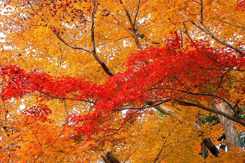 Blätterfluss