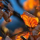 Blätterglühen