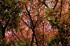 Blätterhimmel