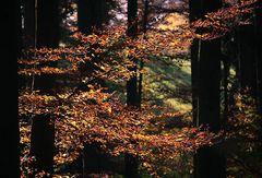 Blätterimpressionen