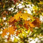 ... Blätterkarussell ...
