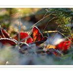 Blätterleuchten