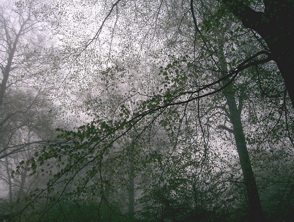 Blättermosaik