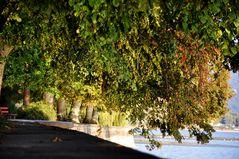 Blätterparadise