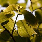 Blätterpracht