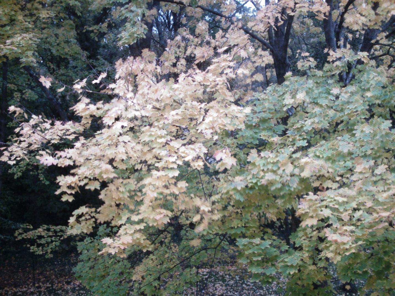 Blätterrauschen vor meinem Fenster