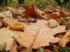 Blätterschlacht