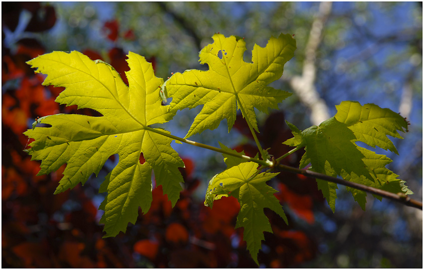 Blätterspiel mit Licht aund Farbe #2