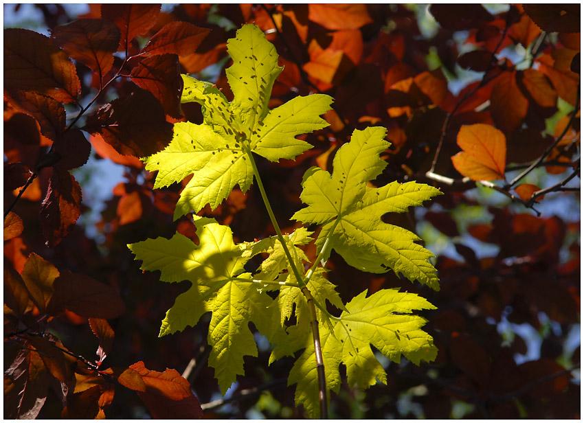 Blätterspiel mit Licht und Farbe #1