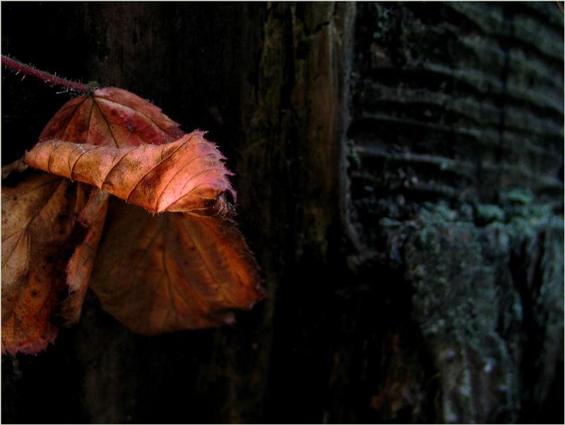 Blättertraum