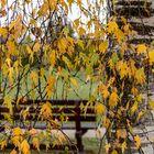 Blättervorhang