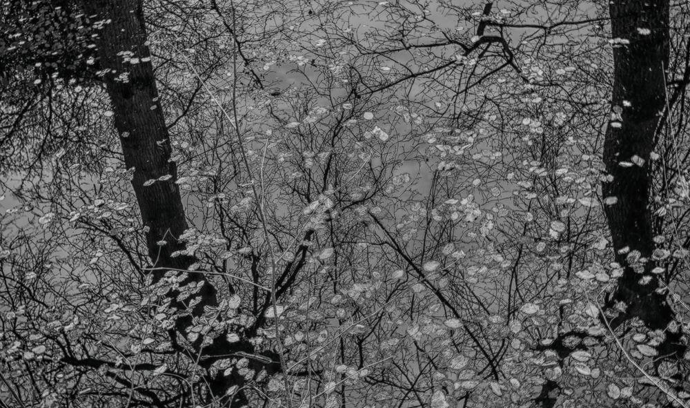 Blätterwald