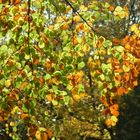 Blätterwald1