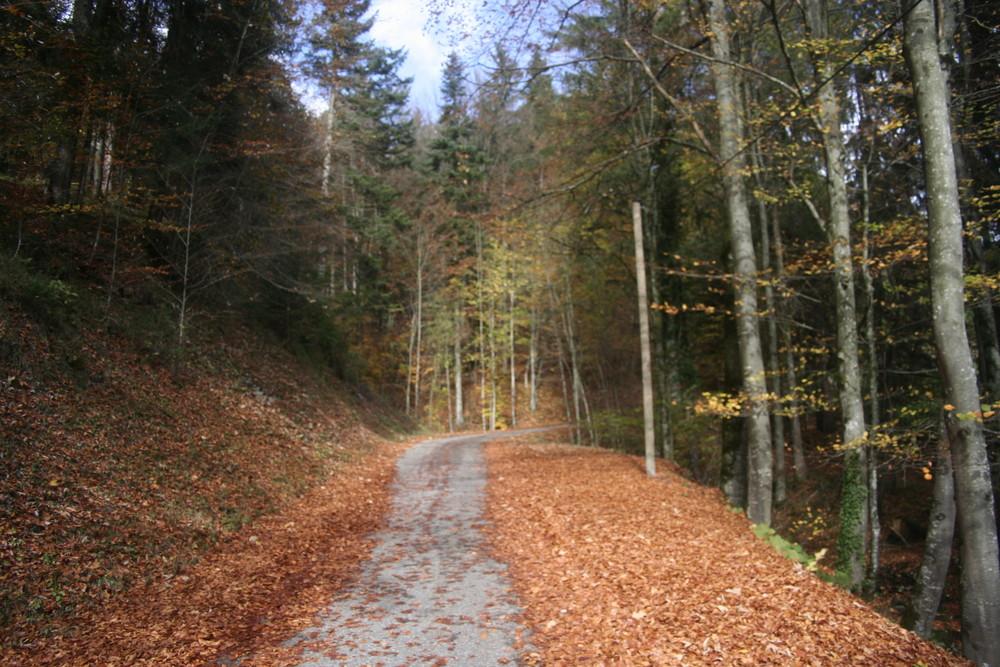 Blätterweg Im Herbst