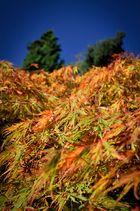 Blätterwelle