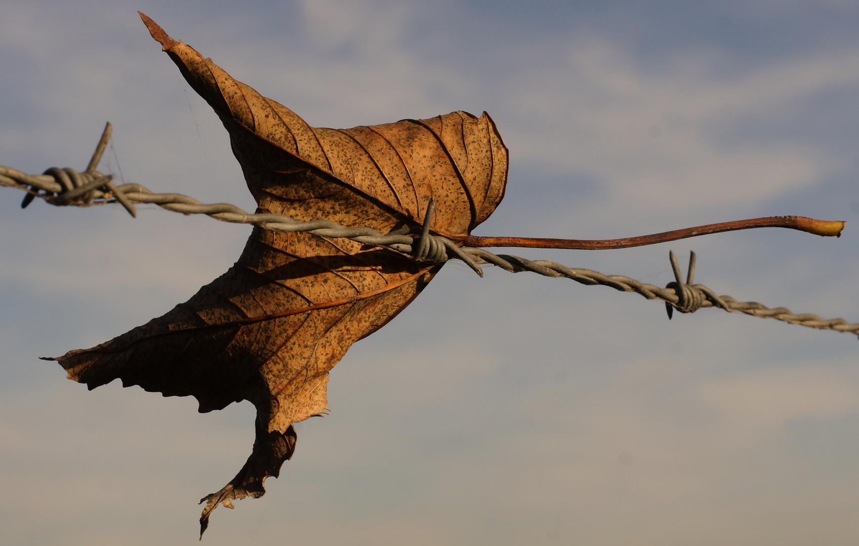 Blatterzaun Foto Bild Jahreszeiten Herbst Natur Bilder Auf