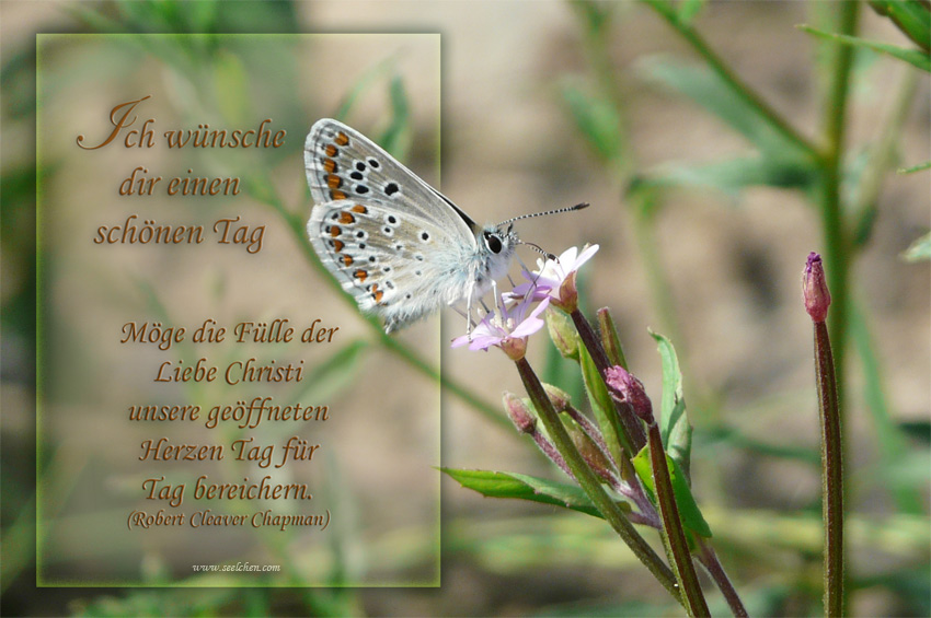 Bläuling / Spruchkarte / Ich wünsche dir einen schönen Tag ...