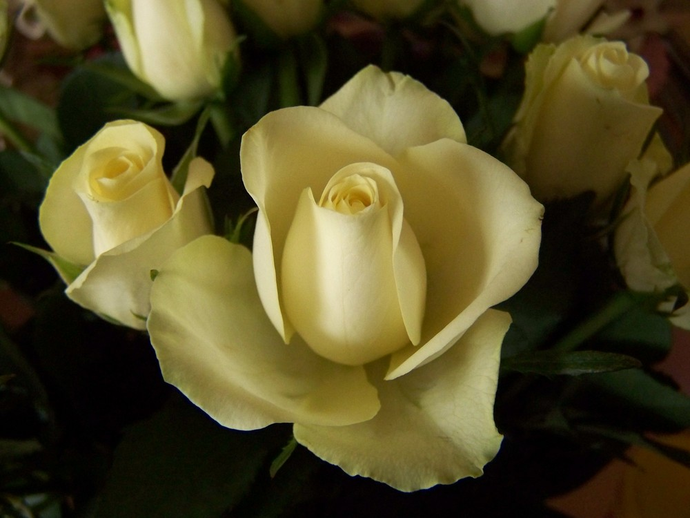 blanc, rose, sensation