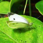 Blanca mariposa!