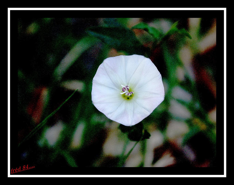 blanche......