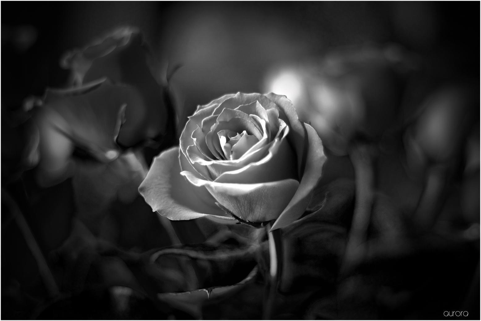 Blanco y negro imagen foto plantas naturaleza fotos de fotocommunity - Fotos en blanco ...