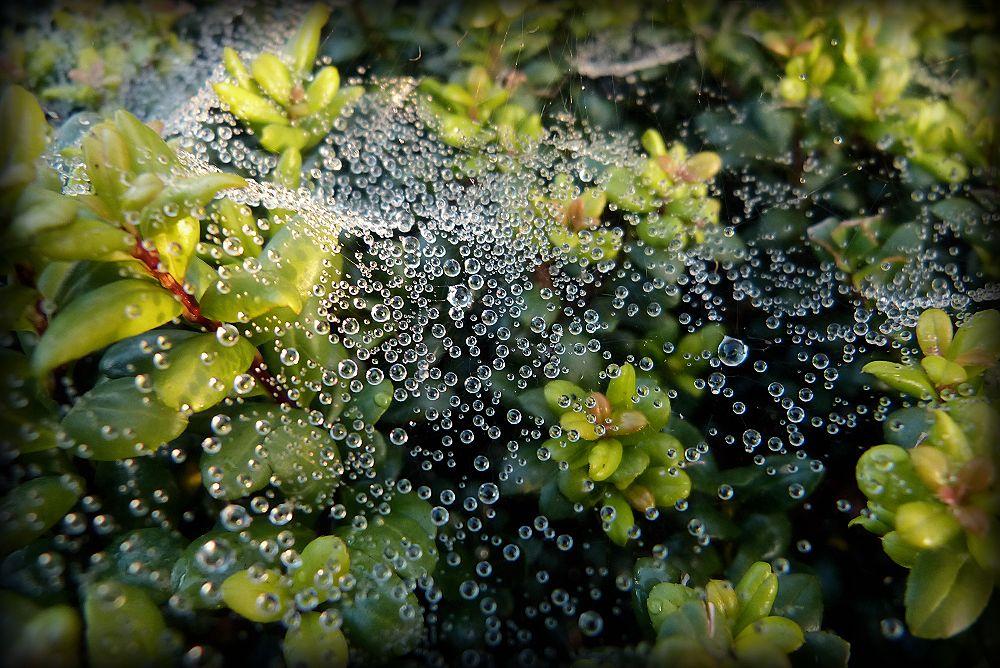 Blanket of dew
