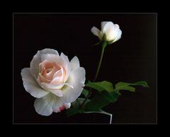 blasses Rosa
