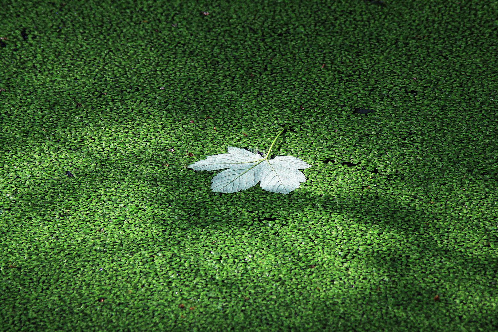 Blatt auf Blätter